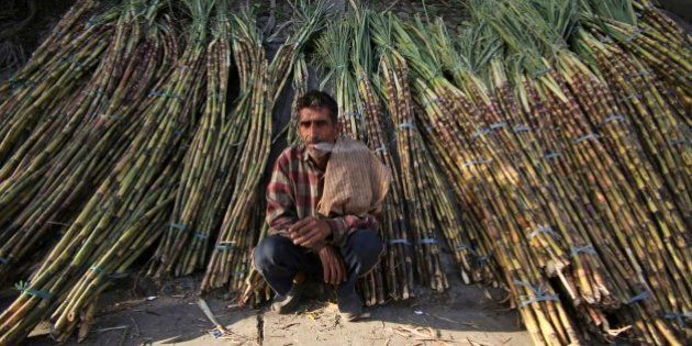 A sugarcane farmer waits for buyers at a roadside wholesale market in Jammu, India, Saturday, April 6,...