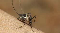 Serum Institute Of India To Seek Fast-Track Nod For New Dengue