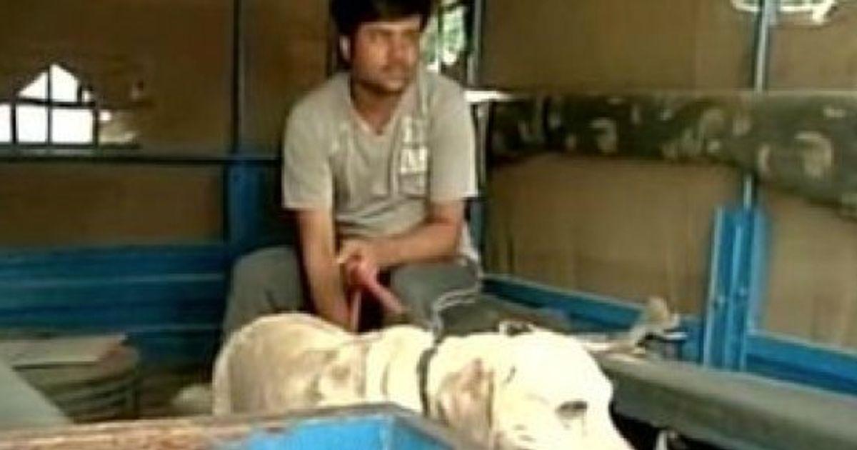 Delhi Police Picked Up Somnath Bharti's Dog 'Don' For