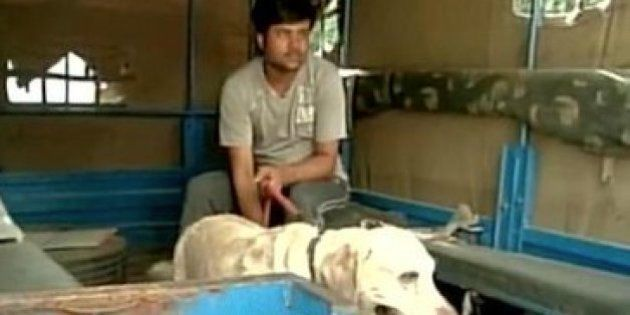 Delhi Police Picked Up Somnath Bharti's Dog 'Don' For
