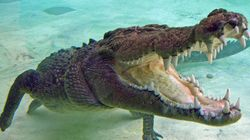 Brave Auto Driver Saves Teen From Crocodile's Jaws In