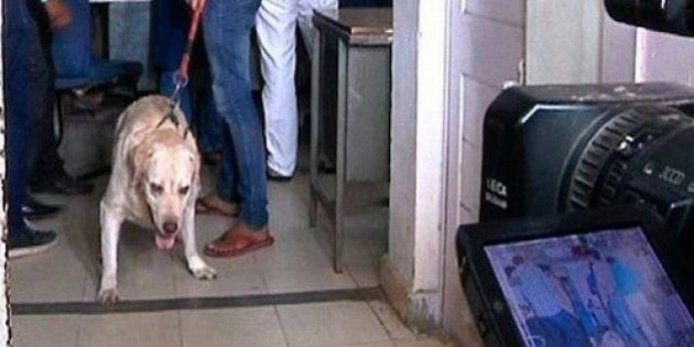 Somnath Bharti's Dog Given A Clean Chit By Court Because He Does Not Obey His