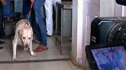 This Is Awkward. Somnath Bharti's Dog Given Clean Chit Because He Does Not Obey His