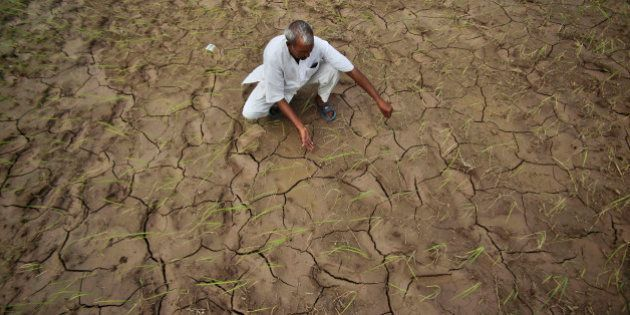 FILE - In this Aug. 3, 2012 file photo, an Indian farmer shows a dry, cracked paddy field in Ranbir Singh...