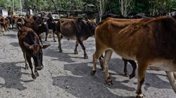Youth Lynched In Himachal Over Alleged Cow