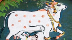 Cow Politics: Slaughtering Humanity, India -- And Modi's