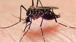 Dengue Menace: Three Children Die Due To Dengue In