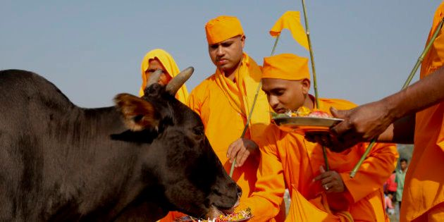 In this Friday, Oct. 9, 2015 photo, Hindu devotees feed a cow after performing Pind Daan rituals, believed...