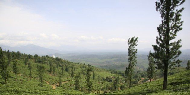 (GERMANY OUT) India - Wayanad: tea estate in the Nilgiri Hills (Photo by Forster/ullstein bild via Getty