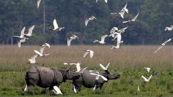 Green Tribunal Asks Assam Government To Clarify Presence Of Swanky Hotels In Kaziranga