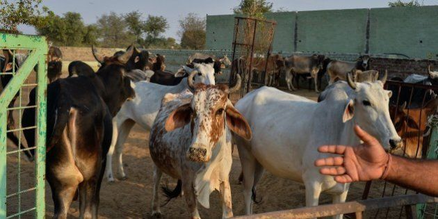 To go with India-politics-religion-beef,FOCUS by Abhaya SRIVASTAVAIn this photograph taken on November...