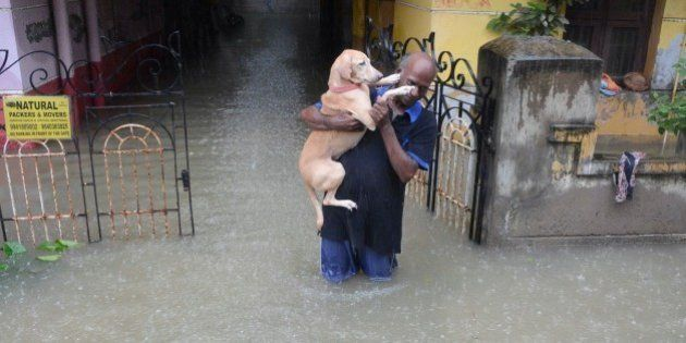 An Indian man carries his dog on a flooded street following heavy rain in Chennai on November 16, 2015....