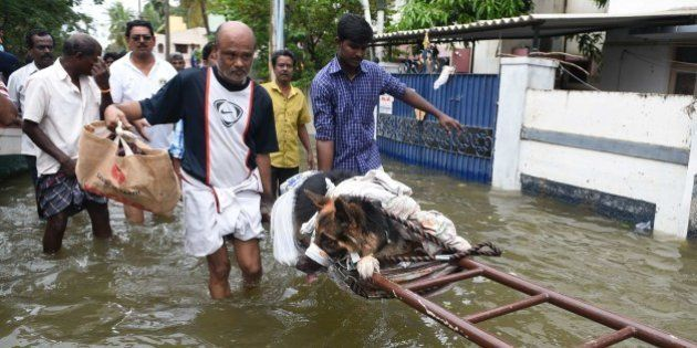 Indian flood-affected people move an injured dog in rain-hit areas on the outskirts of Chennai on November...