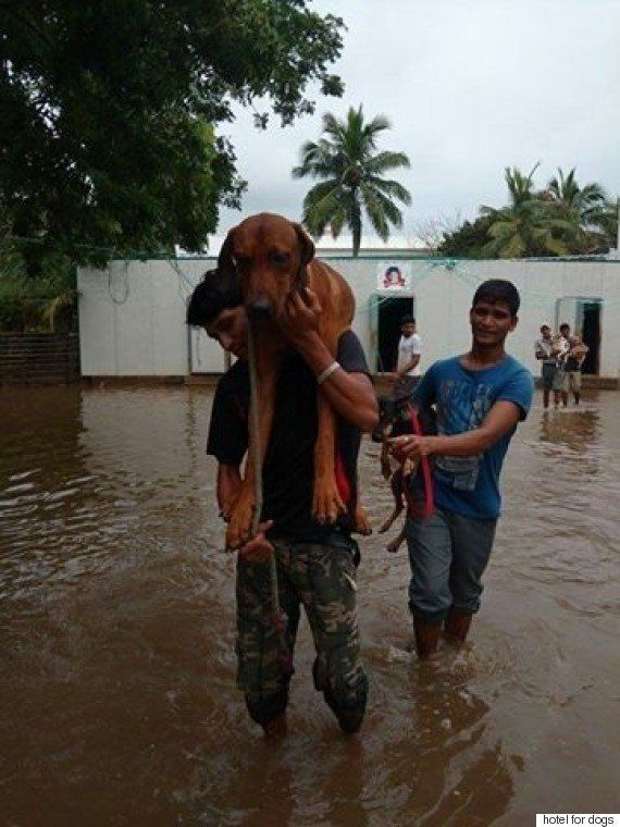 Dogs In Flood-Hit Chennai Find A Safe 'Hotel' In Bengaluru, Thanks To This Group Of