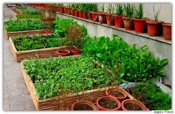 This Organic Producer Is Sowing Seeds Of Hope In Delhi By Encouraging Kitchen