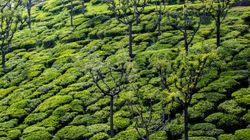 India Can Beat Climate Change With Trees On Farms: World Agroforestry
