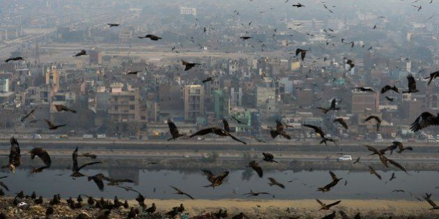 Birds fly through a cloud of pollution which envelops aresidential area near the Anand Vihar District...