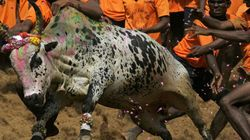 Centre's Notification Allowing Jallikattu Challenged In
