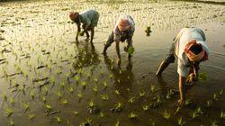 Crop Insurance Scheme Gets Cabinet's