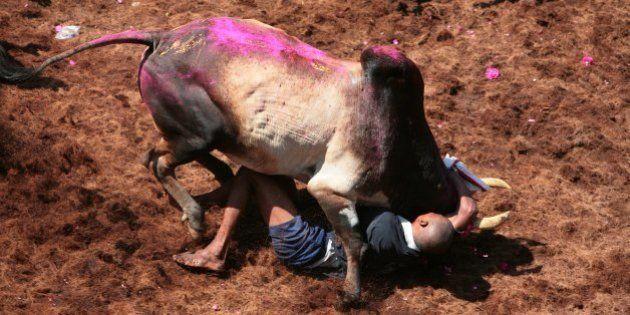 ALANGANALLUR, INDIA - JANUARY 16: Participants in the Jallikattu bull-wrestling festival are trampled...