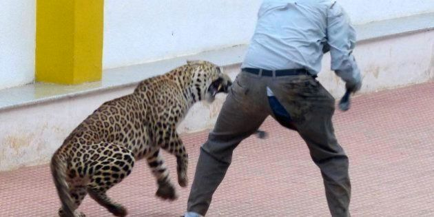 PHOTOS: This Man's Close Encounter With Leopard Inside Bengaluru School Is Stuff Of