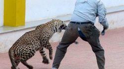 WATCH: Bone Chilling Video Of Bengaluru Leopard Attack Is