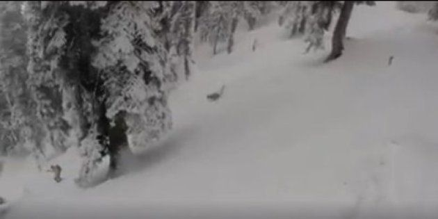 WATCH: Australian Skier Gets Chased By A Snow Leopard In