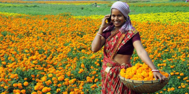 Village woman plucking marigold while receiving mobile