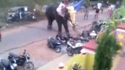 WATCH: Rampaging Temple Tusker In Kerala Tosses Around Pick-Up