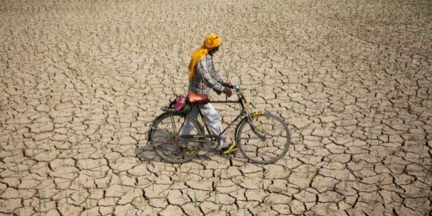 An Indian farmer pushes his bicycle past a parched paddy field in Ranbir Singh Pura, about 34 kilometers...