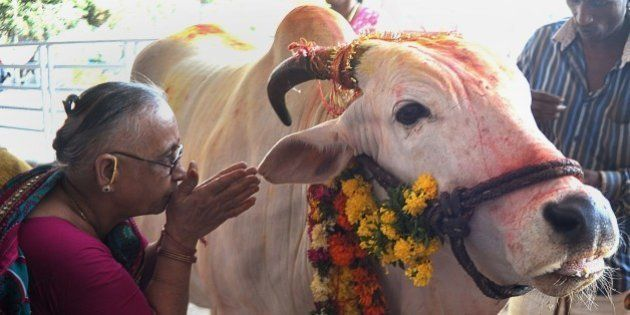 An Indian Hindu devotee offers prayers to a sacred cow on the eve of Gopastami in Hyderabad October 31,...
