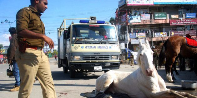 DEHRADUN, INDIA - MARCH 14: Police horse Shaktimaan got his leg fracture after allegedly beaten by BJP...