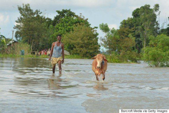 Beef Ban Pushing Maharashtra Farmers Into