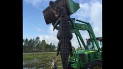 This Photo Of A Gigantic Alligator Will Haunt You