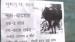 Distraught Varanasi Man Puts Up 'Missing' Posters For Beloved Bull Who Had 'Access To His