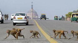 Rajya Sabha MPs Want Help In Managing Monkeys And