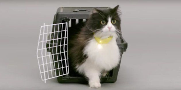 Ameowzing! Finally, A Collar That Will Help Humans Understand Cats