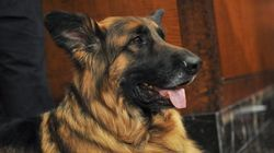 A Dog Chased Off ISIS Fighters Saving Lives Of British Troops In