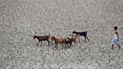 Drought Woe: 'Ostrich-Like Attitude A Pity', SC Tells