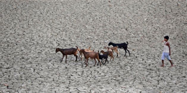 An indian boy follows a herd of goat on a parched water pond in Kaushambi, nearly 25 kms from Allahabad,...