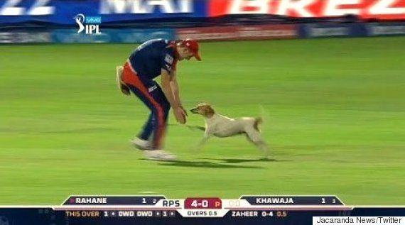 Stray Dog Bounces Into IPL Match, Brings The Game To A Grinding