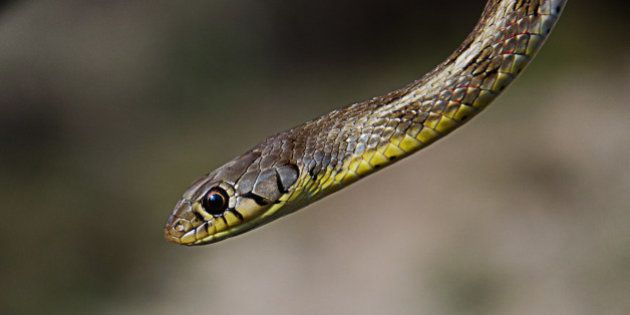 Why Snakes Should Matter To The Make In India Mission