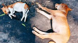 Savagery In The Name Of Civilization: The Slaughter Of Stray Dogs By Kolkata
