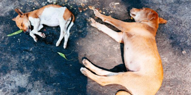 CALCUTTA, WEST BENGAL, INDIA - 2013/12/30: Dogs sleeping on the ground around Kalighat temple. (Photo...
