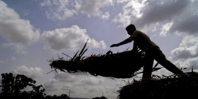 An unidentified farmer unloads grass against a backdrop of pre-monsoon clouds on the outskirts of Ahmadabad,...