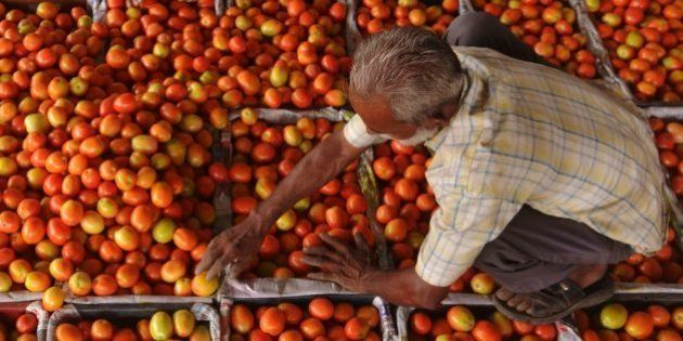 An Indian labourer fills plastic crates with tomatoes before they are repacked to be sold at a wholesale...