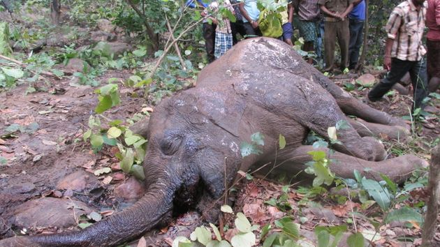 39 Elephants Have Died In Odisha But No One Knows