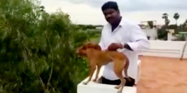 Medical Students Who Tortured A Dog In Chennai Arrested, Out On