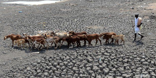 An Indian farmer herds his sheep on the dry bed of a river at Bibi Nagar in Nalgonda District, some 40...