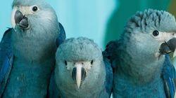 Άγρια ζώα που εξαφανίστηκαν από τον πλανήτη το